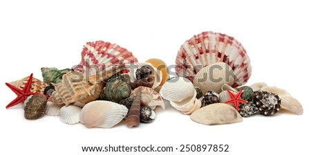 Seashell isolated on white background. - stock photo