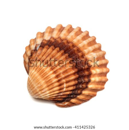Seashell isolated on white background. Top view. - stock photo