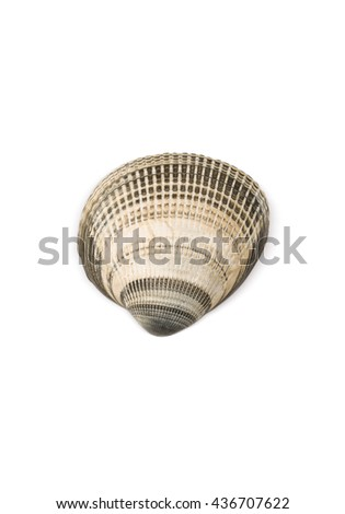 Seashell Isolated on White Background (with clipping path) - stock photo