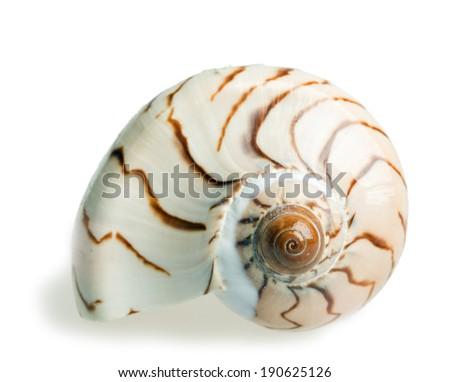 seashell isolated over white background - stock photo