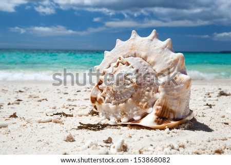 Seashell on caribbean beach - stock photo