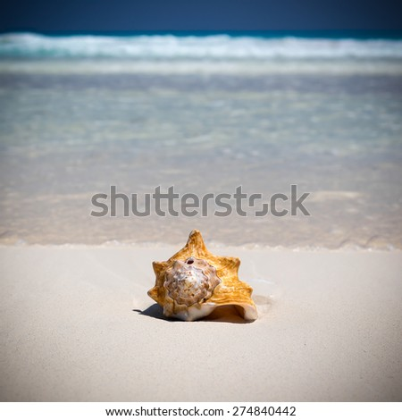Seashell on caribbean sandy beach, travel concept