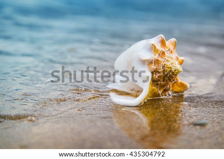 Seashell on sand of the beach in sunlight, background, close up - stock photo