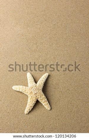 Seashell on the beach at sunrise - stock photo