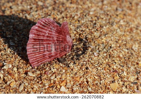 Seashell on the beach on summer vacation and vacation - stock photo