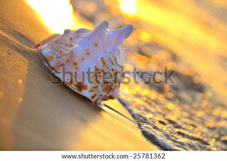 seashell on the sand at sunrise/sunset