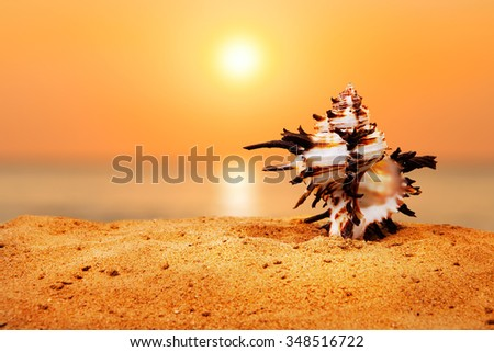 Seashell on the sunset beach. Background with place for text. - stock photo