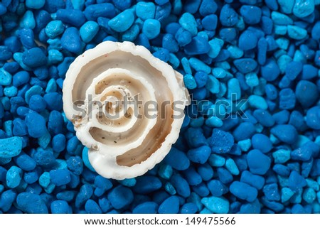 Seashell section closeup on blue background - stock photo