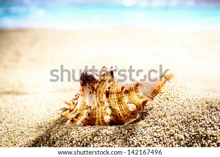 Seashell washed up by the tides lying on beach sand with an ocean backdrop and shallow dof - stock photo