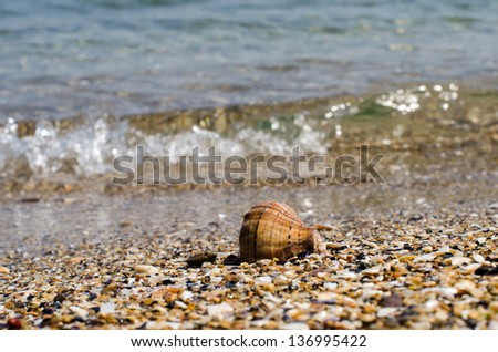 Seashell with sand was background and a small wave