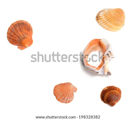 Seashells and broken rapana isolated on white background. Top view. - stock photo