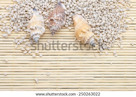 Seashells and sand, background, copy space - stock photo