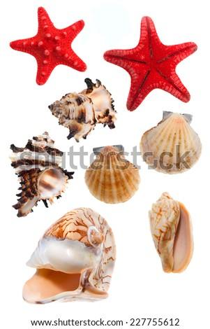 Seashells and starfish isolated on white background - stock photo