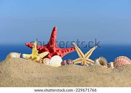 Seashells and starfish on a beach sand. In the background of sea and sky - stock photo