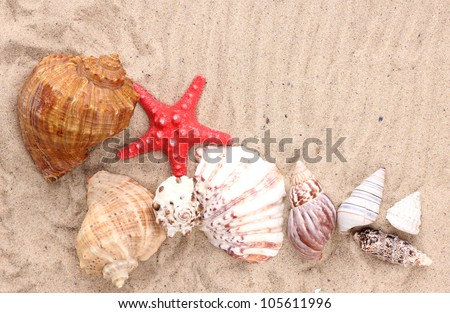 Seashells and starfish on sand - stock photo