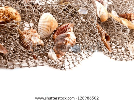 seashells and starfish on the fishing network on a white background - stock photo