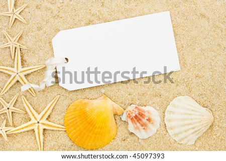 Seashells and starfish sitting on a sand background, starfish and seashells