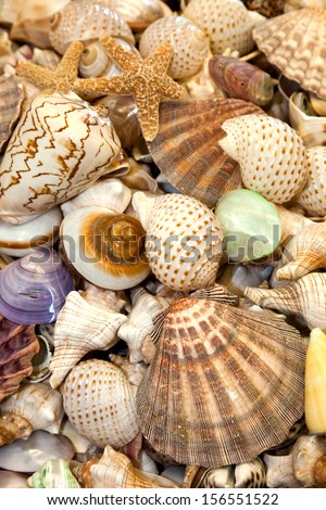 Seashells Collection for background use - stock photo