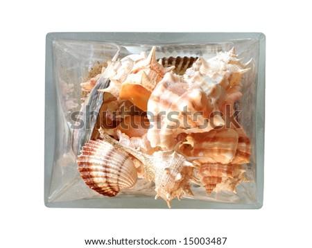 seashells in a vase isolated on white background - stock photo