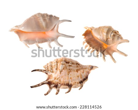 Seashells isolated on white background - stock photo