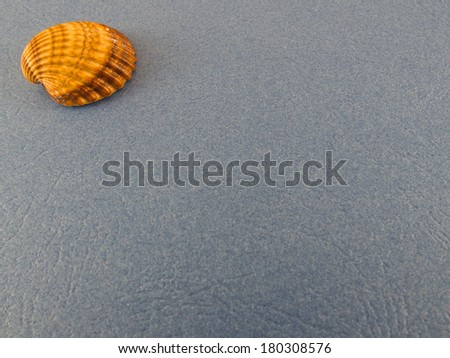 seashells on a blue background