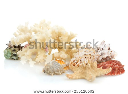 seashells on an isolated background