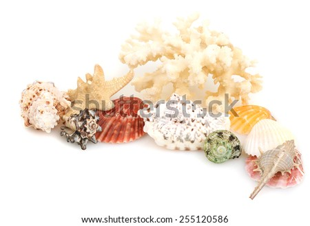 seashells on an isolated background - stock photo