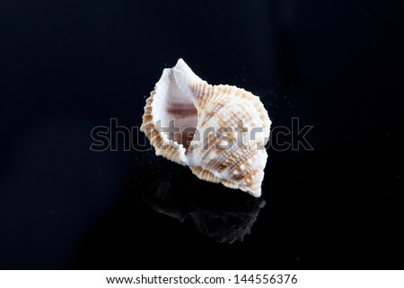 seashells on black background