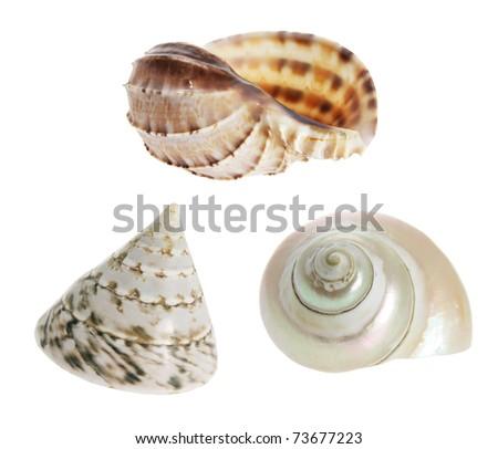 Seashells on Isolated White Background - stock photo