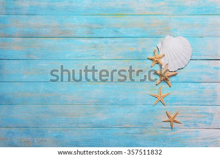 Seashells on light blue background - stock photo