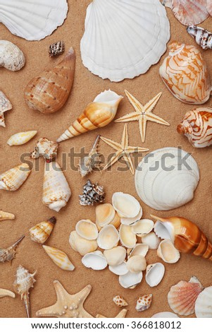Seashells on paper background