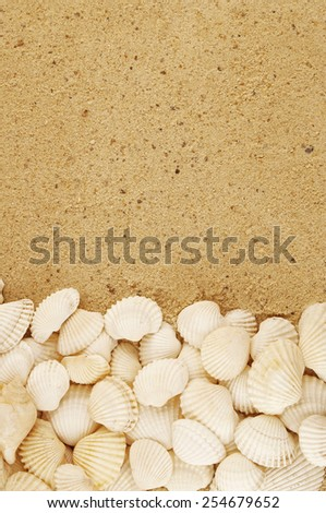 Seashells on sand background with room for text - stock photo