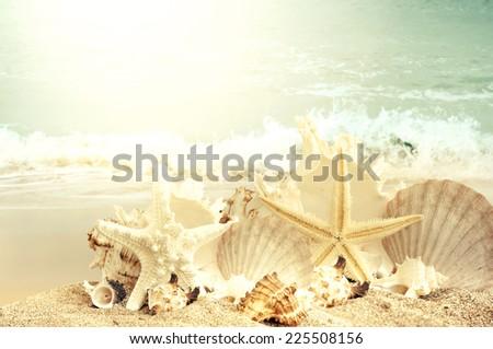 Seashells  on sand beach - stock photo
