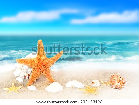 seashells on seashore in tropical beach - summer holiday background - stock photo