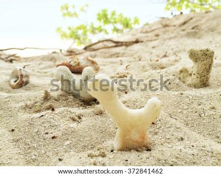 Seashells on the sand in a tropical island, Maldives. - stock photo