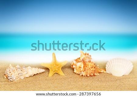 Seashells on the summer beach - stock photo