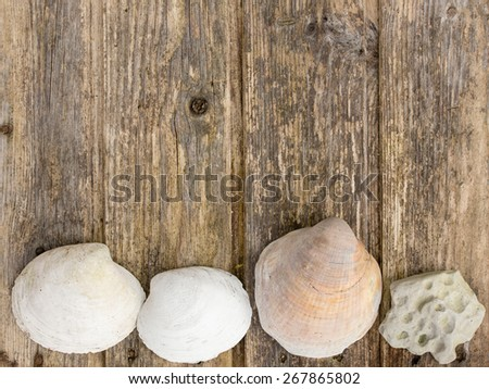 seashells on wooden background copy space - stock photo