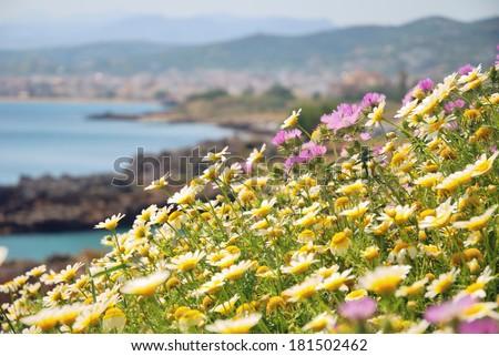 Seaside meadow in bloom in springtime on the island of Crete, Greece - stock photo