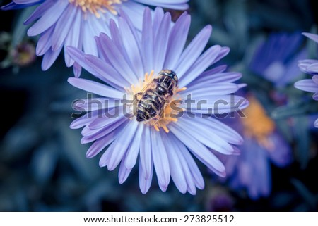 season in memory--flower and fly - stock photo