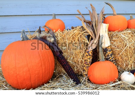 Seasonal Fall Decoration for Harvest and Thanksgiving from Bales of Hay, Maize (corn on knob, Indian corn), Orange and White mini Pumpkins with (long) stem in front of gray wooden wall