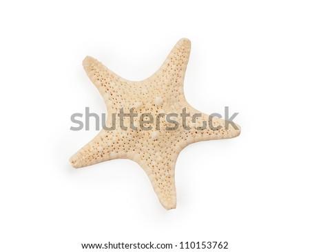 Seastar isolated on white background - stock photo