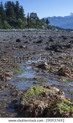 Seaweed at low tide in Viking Cover near Haines Alaska on a sunny day. - stock photo