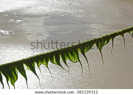 Seaweed hanging from mooring line with light behind. Newquay harbour, Cornwall, England - stock photo