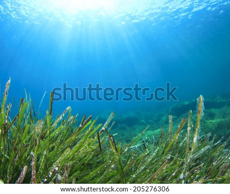 Seaweed sea grass - stock photo