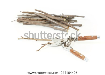 Secateurs with fruit twigs on white - pruning concept - stock photo