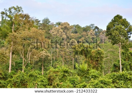 Secondary Tropical Rain Forest in Sabah, Borneo Island, Malaysia - stock photo