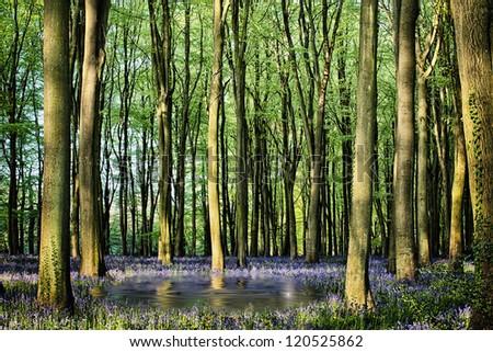 Secret pond in bluebell woods - stock photo