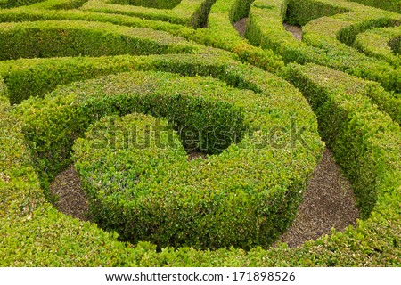 Section of formal knot garden - stock photo