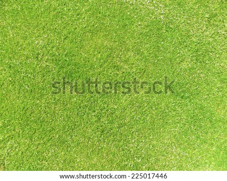 Section of newly cut grass for backgrounds and fills