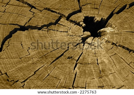 Section of tree - stock photo